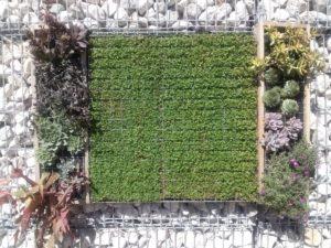 giardino-appeso-inerteco