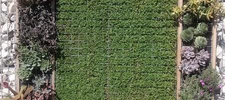 giardino-verticale-inerteco-128